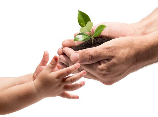 Hände eines Erwachsenen reichen kleine Pflanze in Erde an Kinderhand